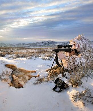 Coyote Tactics: How to Hunt the Coyote Rut