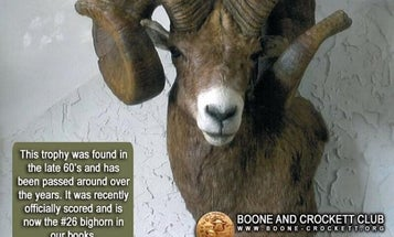 Boone and Crockett Club Bighorn Sheep Finally Scored After More Than 40 Years