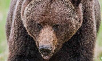 Bear Defense Pepper Spray Beats a Firearm (Unless You Can Shoot)