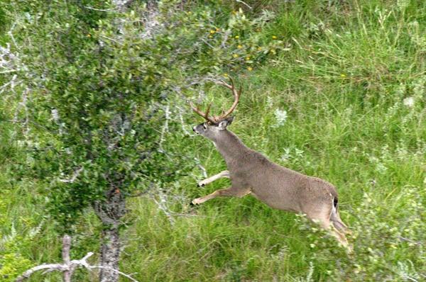 httpswww.outdoorlife.comsitesoutdoorlife.comfilesimport2014importImage2010photo30010FordRanch_093.jpg