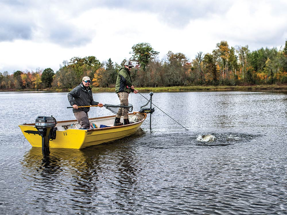 Fly-caught muskie makes a boatside surge