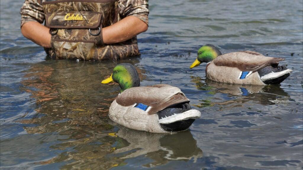 greenhead gear duck decoys
