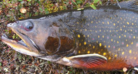 Lawyers, Trout, and Money: The Battle for Public Access on Michigan's Salmon Trout River