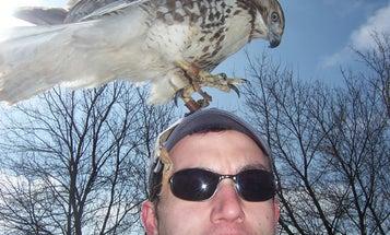 Falconry: A Showcase of Savage Nature