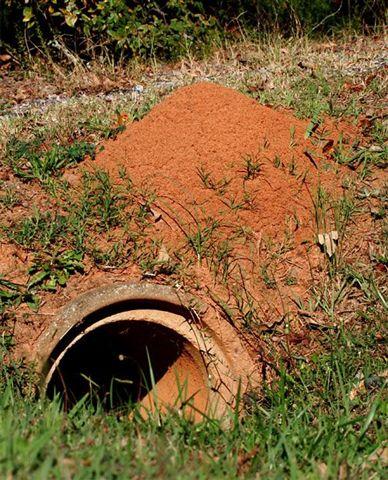 httpswww.outdoorlife.comsitesoutdoorlife.comfilesimport2014importImage2010photo3001045__fire_ants_so_deadly.jpg