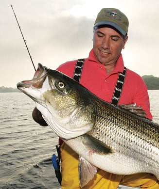 Are Stripers on the Brink Again?
