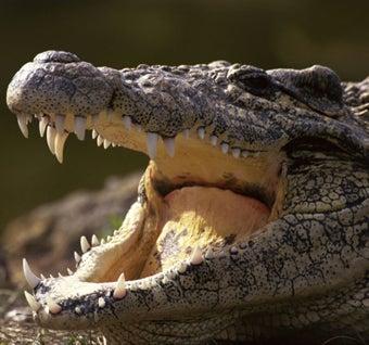 Biggest Crocs Ever!