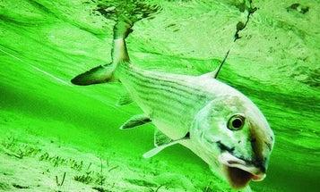 Bonefish Hot Spot: Chasing Bones in the Bahamas