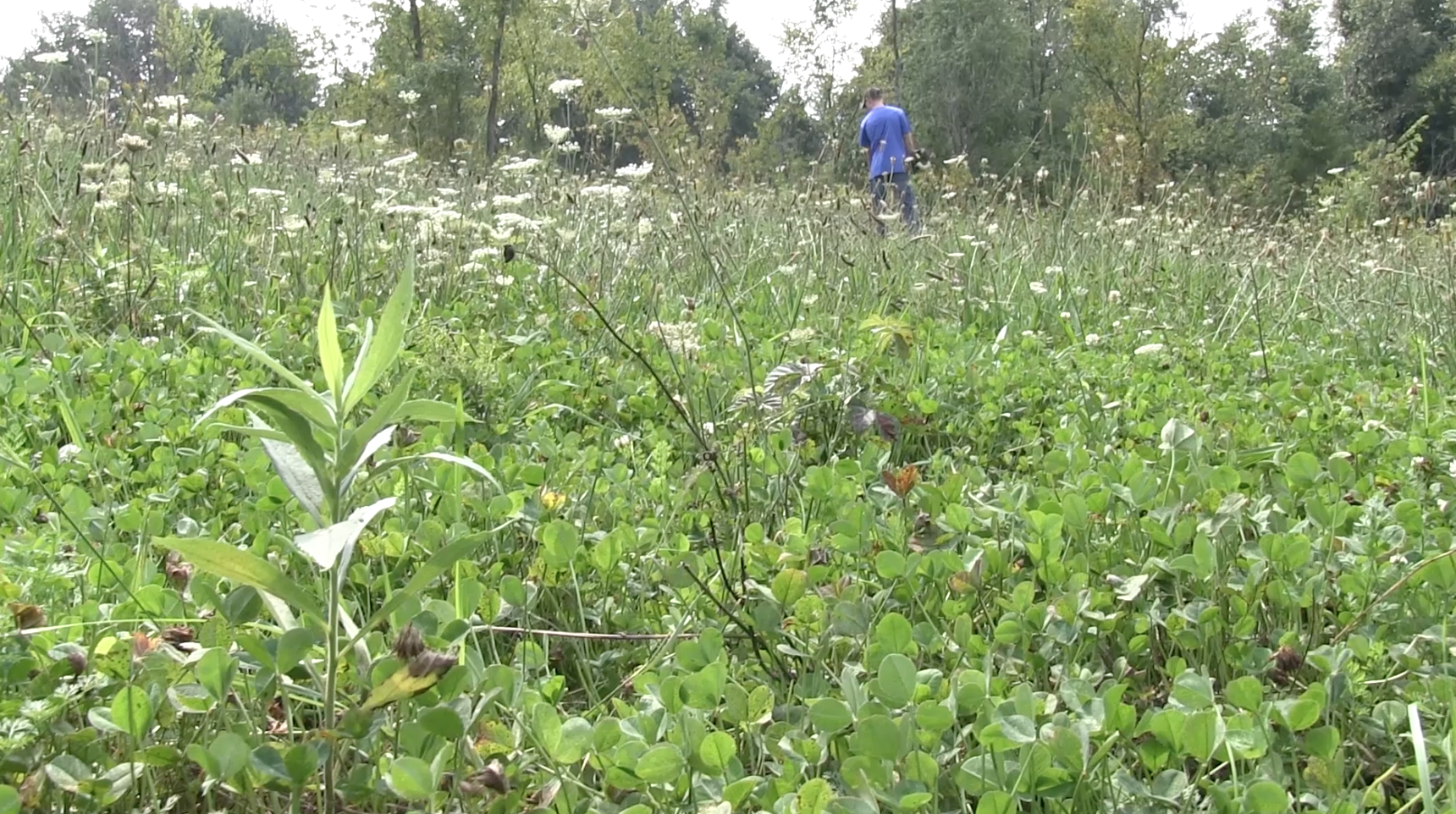 The Magic Food Plot Seed: Why You Should Plant Clover