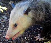 Which Wild Animals Are Safe to Eat in a Survival Situation?