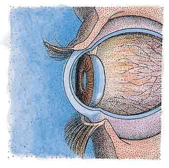 """""""corneal"""