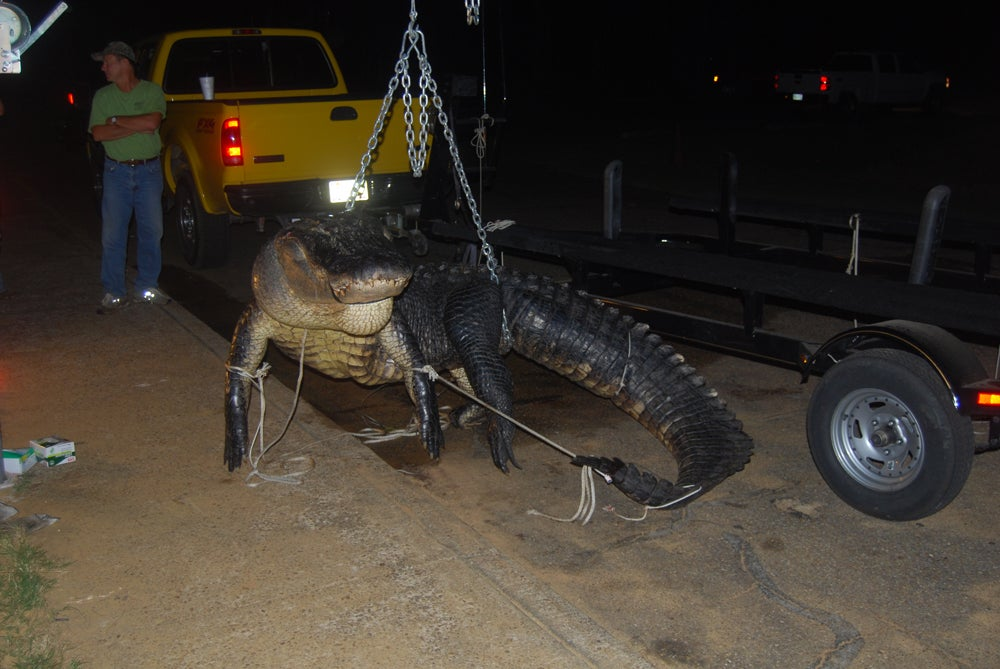 httpswww.outdoorlife.comsitesoutdoorlife.comfilesimport2014importImage2011photo10013215792_al_gator6.jpg