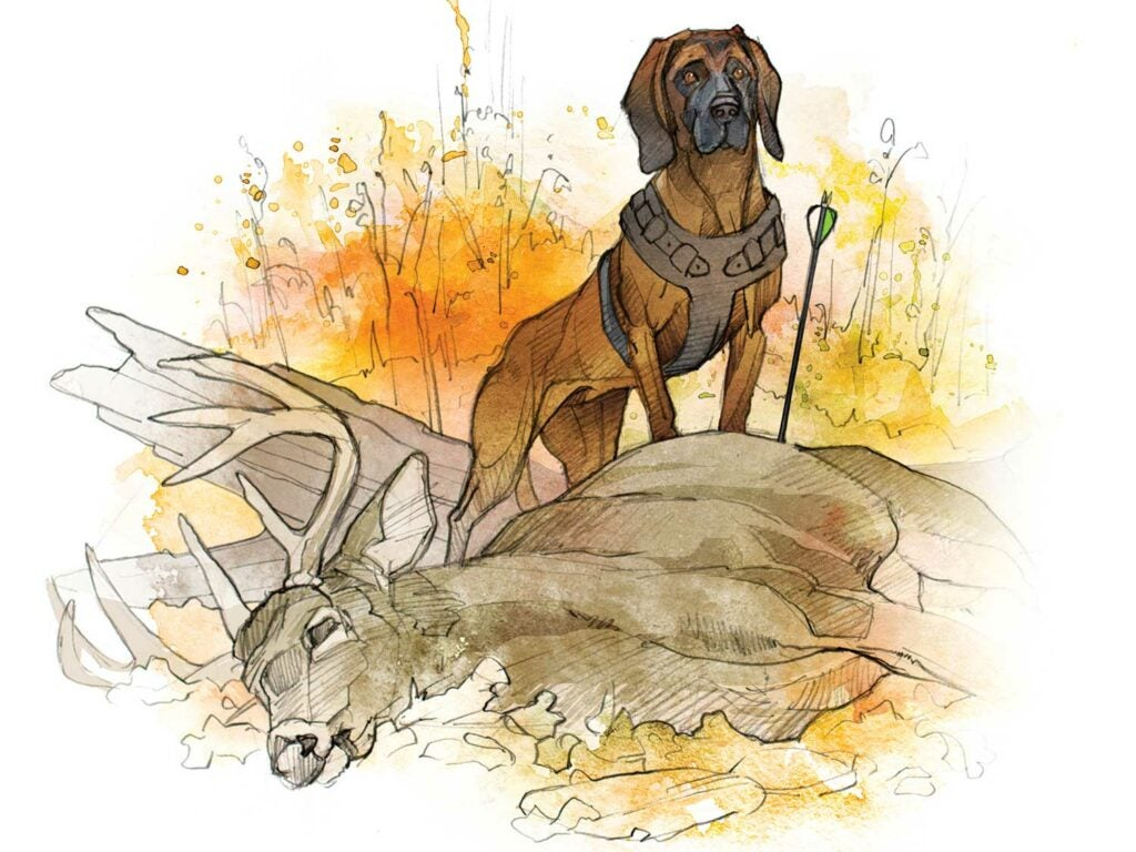 huntign dogs, bloodhound