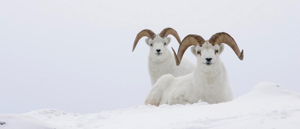 Sheep Wars Part I