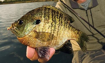 Best Baits: 15 Hottest Lures for Panfish