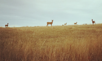Lesson from the Deer Lab: The More You Hunt, the Harder You Have to Hunt
