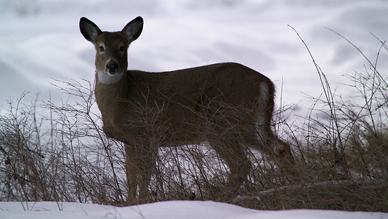 5 Winter Projects for Better Deer Hunting Next Fall