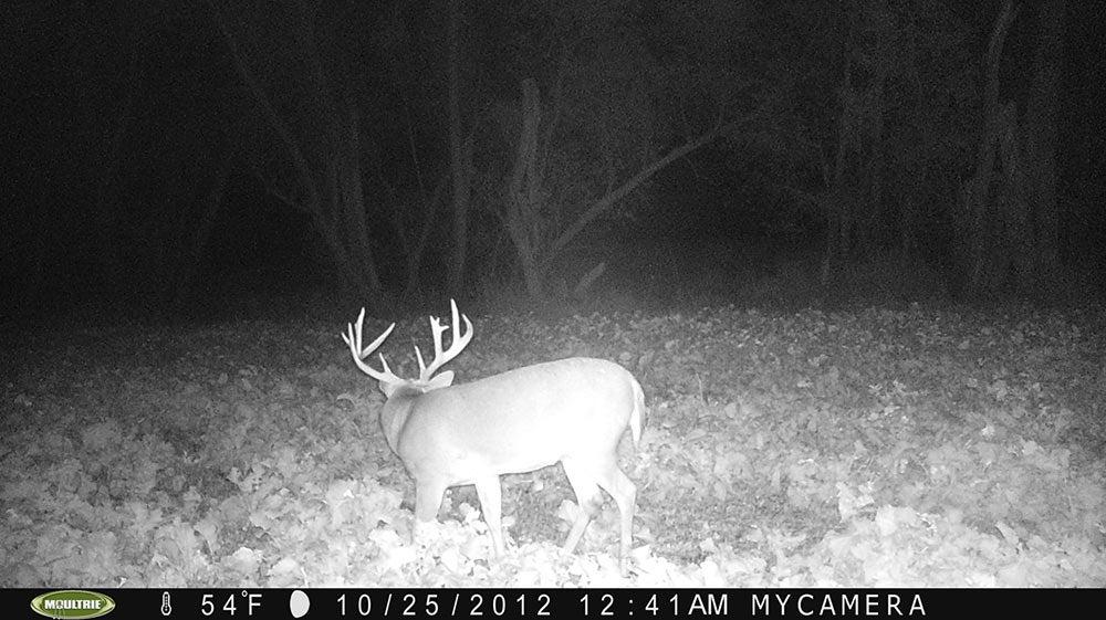 deer cam footage october lull