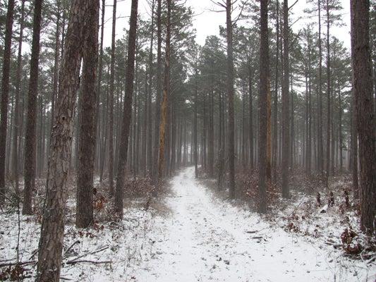 httpswww.outdoorlife.comsitesoutdoorlife.comfilesimport2013images2011026_In_heavy_timber_truck_spreading_old_ridge_top_logging_roads_works_best_0.jpg