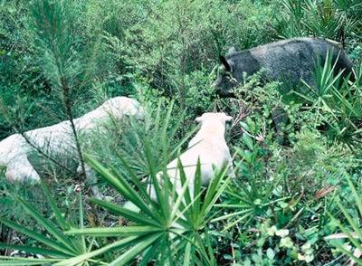 httpswww.outdoorlife.comsitesoutdoorlife.comfilesimport2014importImage2008legacyoutdoorlifegrass_cornered_1.jpg