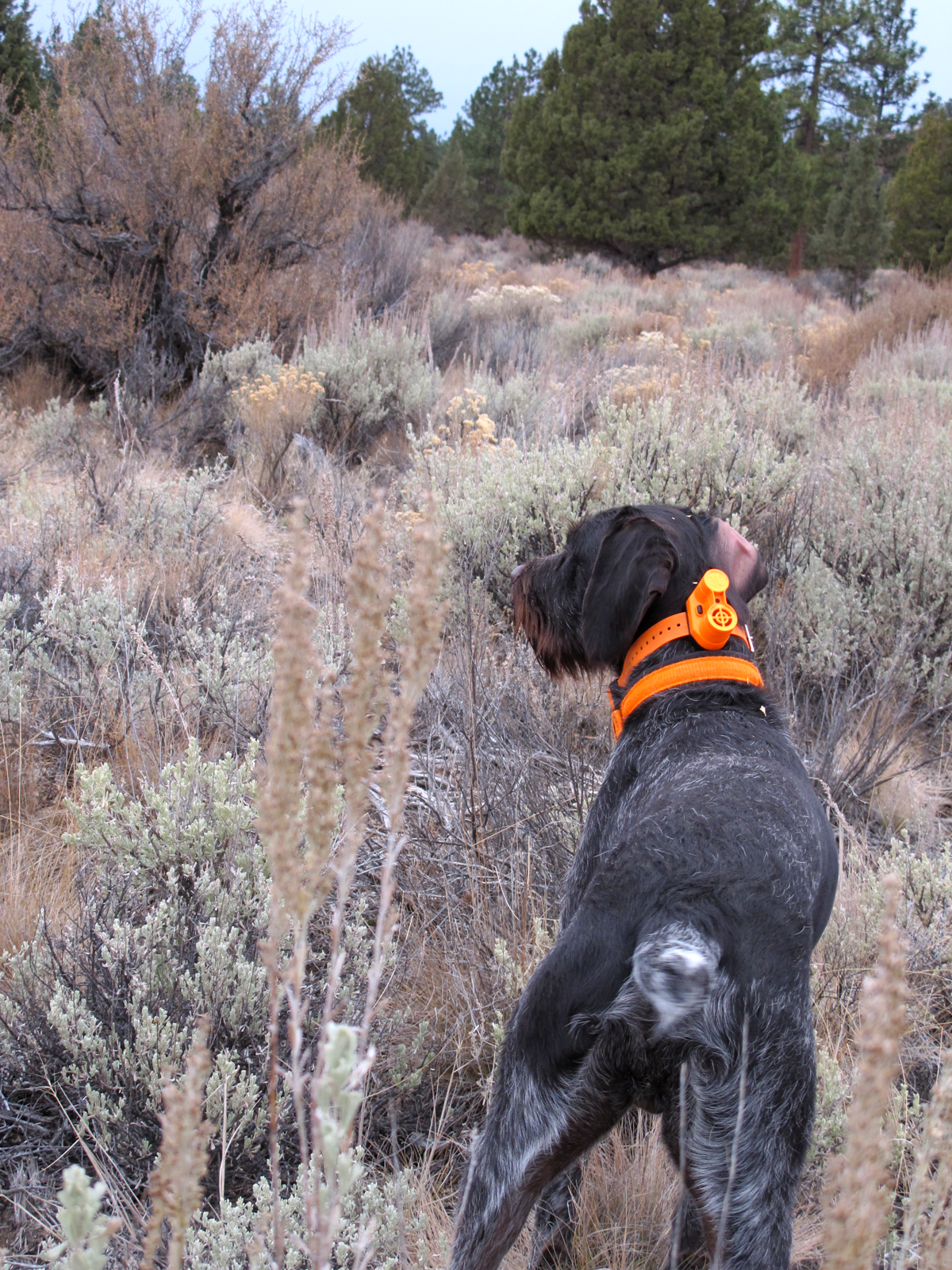 How to Make Blind Retrieves a Little Less Blind
