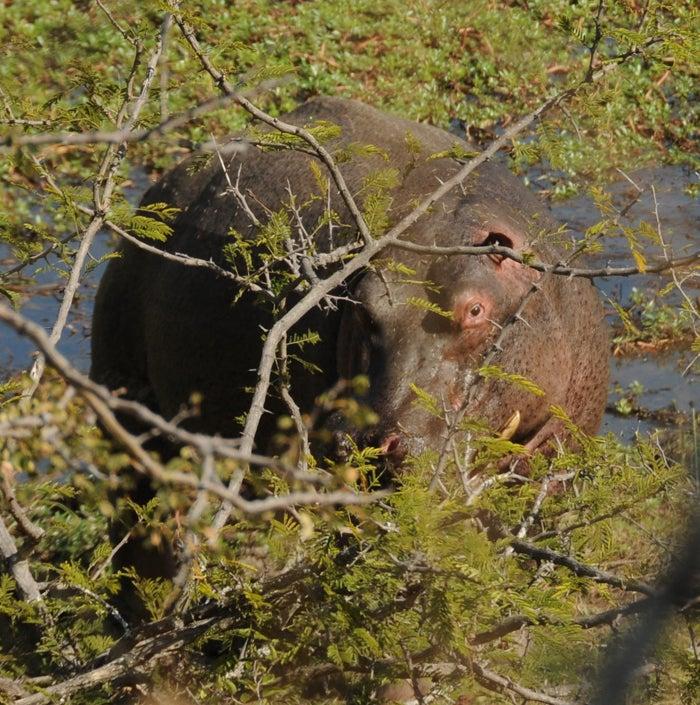 httpswww.outdoorlife.comsitesoutdoorlife.comfilesimport2014importImage2009photo7Africa7.JPG