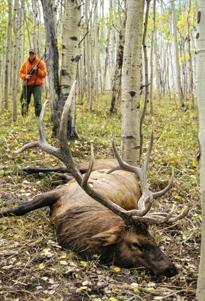 hunting tough elk