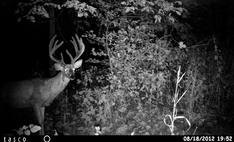 Watching antler growth on the trail cam.