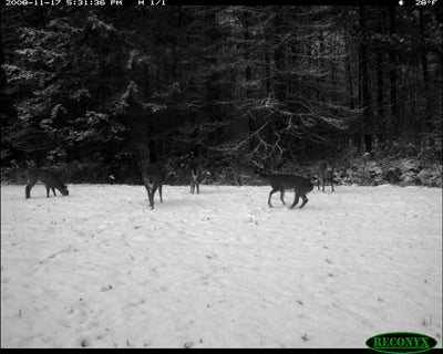 httpswww.outdoorlife.comsitesoutdoorlife.comfilesimport2014importImage2008legacyoutdoorlife125-dec1_deer_forecast_2.JPG