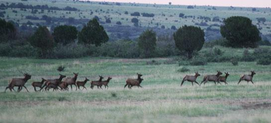 Should Shooting at a Running Herd of Elk be Illegal?
