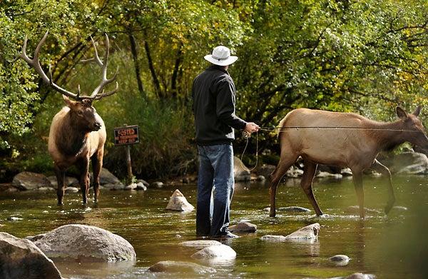 httpswww.outdoorlife.comsitesoutdoorlife.comfilesimport2014importImage2011photo1001321579elkfishing_02.jpg