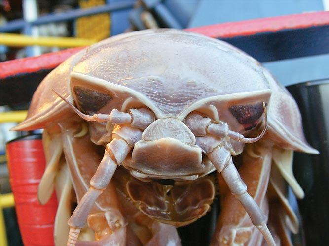 httpswww.outdoorlife.comsitesoutdoorlife.comfilesimport2014importImage2011photo1001321579140-0411fish_facts_00.jpg