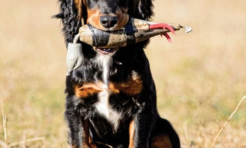 Hunting Dog Training: Your Pup's First Year