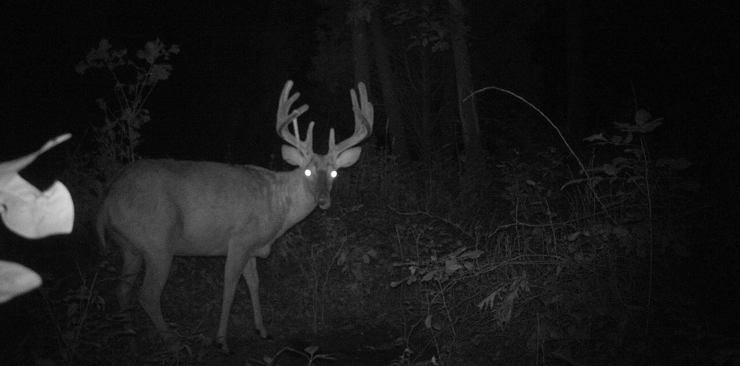 Whitetail Deer: 3 Tips For Dealing With A Lost Deer