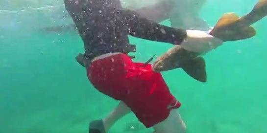 """Video: Small Shark """"Attacks"""" Snorkler"""