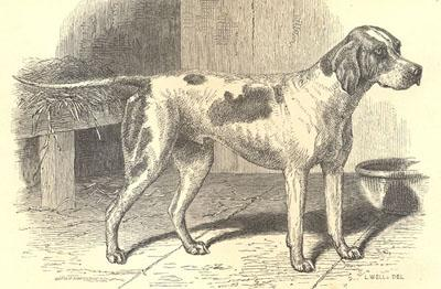 How Old is the Domestic Dog?