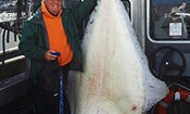 Monster Pacific Halibut Will Not Qualify for IGFA World Record
