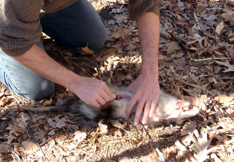 The Pros and Cons of Salvaging Road Kill for Consumption (Plus a Few Tips)