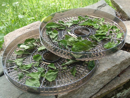 Survival Skills: How to Dry and Pickle Wild Edible Plants