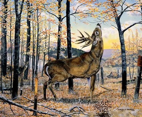 httpswww.outdoorlife.comsitesoutdoorlife.comfilesimport2014importImage2008legacyoutdoorlifedenault_paintings_LickingBranch.jpg