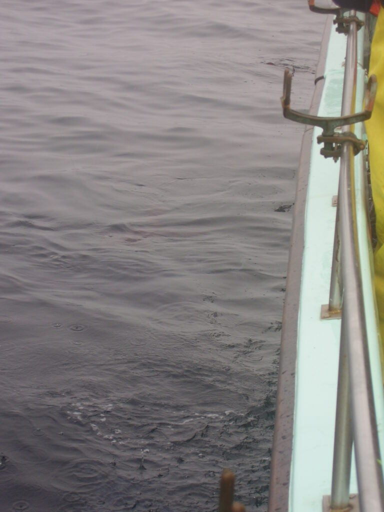 Looking for squid offshore