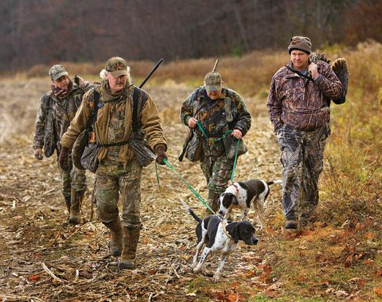 Turn Your Flushing Dog into a Turkey Hunter