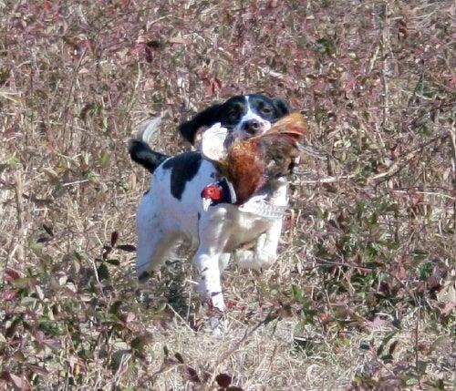 httpswww.outdoorlife.comsitesoutdoorlife.comfilesimport2014importImage2009photo710._Missouri.jpg