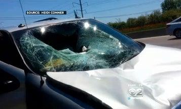 Falling Deer Smashes Minivan on Illinois Highway