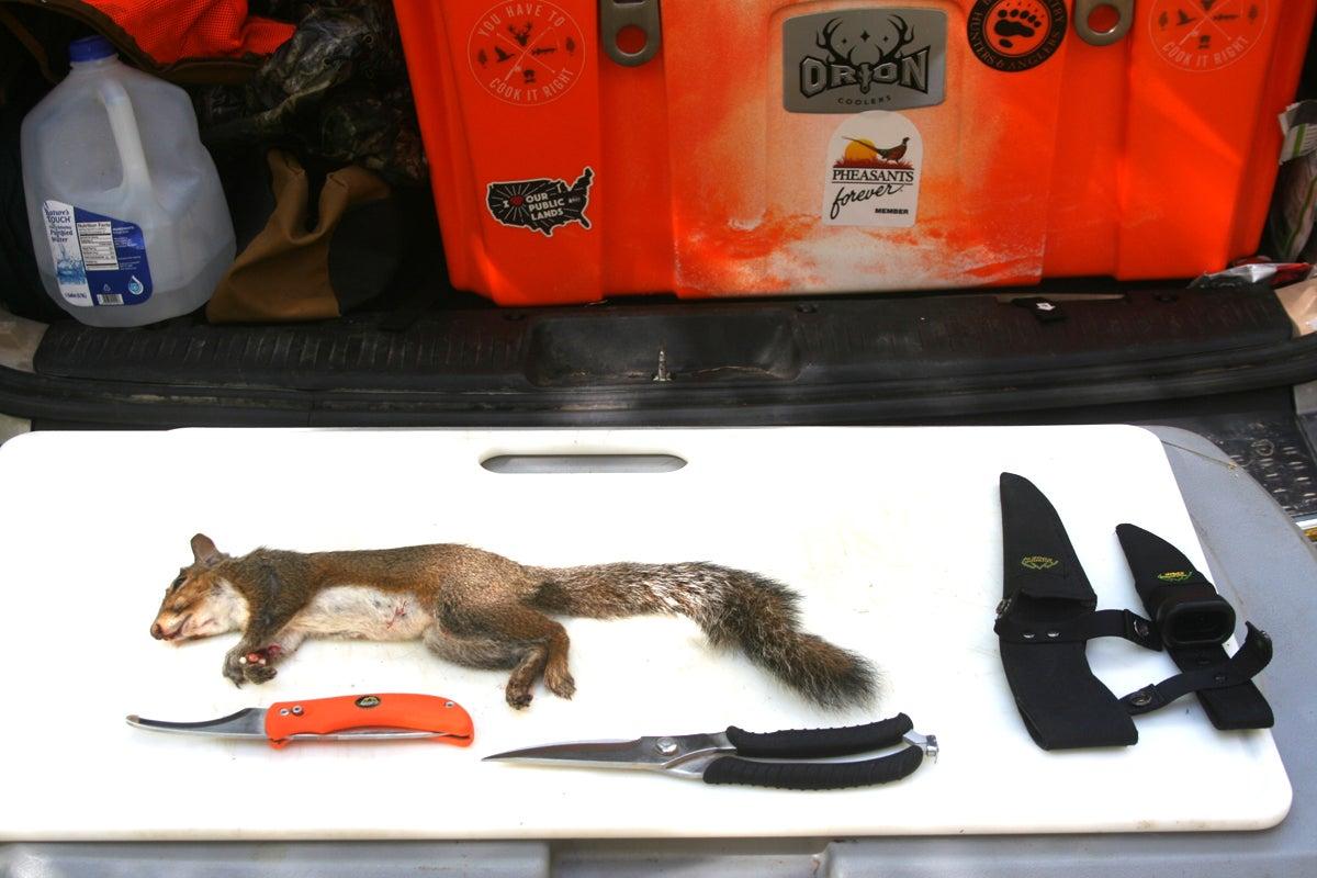 squirrel skinning station