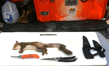 How to Skin and Cut Up a Squirrel in 9 Steps