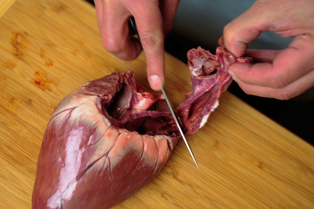 trimming deer heart