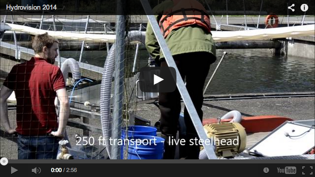 Video: Washington State Transports Salmon with Fish Cannons