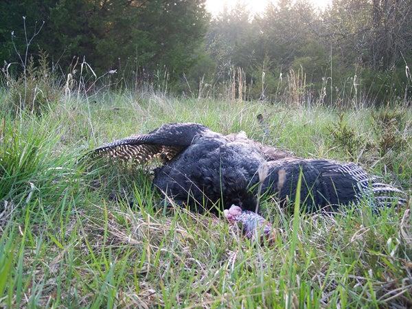 httpswww.outdoorlife.comsitesoutdoorlife.comfilesimport2013images20110523_Spring2011TurkSeason010_0.jpg