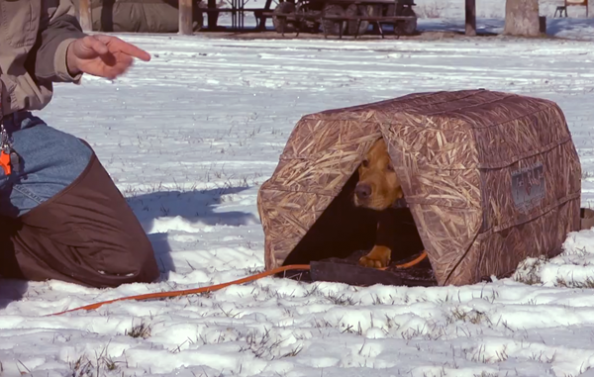 Hunting Dogs: Puppy Introduction and Crate Training Tips